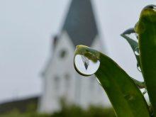 Kirchturm von Nebel, hängender Regentropfen an einem Buchsbaumblatt. Regen hat auch seine schönen Seiten!