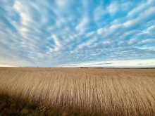 Himmel und Getreide in Norddorf
